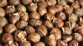 Chestnuts Wallpaper For Desktop
