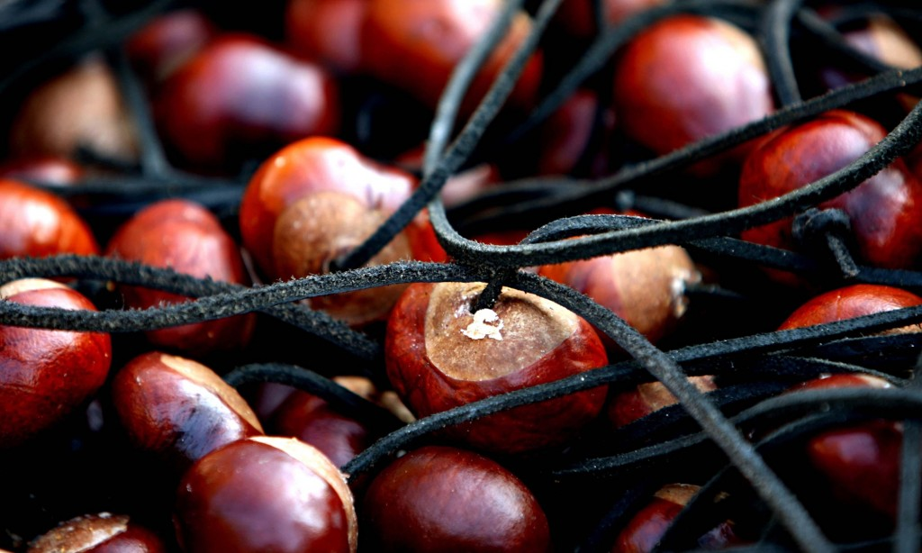 Chestnuts wallpapers HD