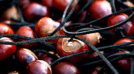 Chestnuts Wallpaper HD