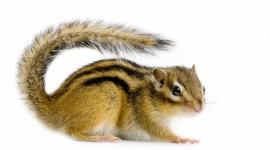 Chipmunks Image