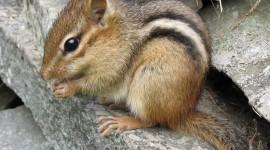 Chipmunks Photo#1