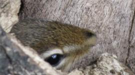 Chipmunks Photo#2