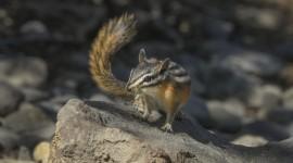 Chipmunks Wallpaper 1080p