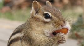 Chipmunks Wallpaper Download Free