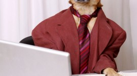 Dogs In Suits Wallpaper Download