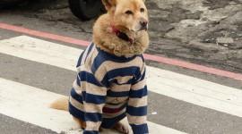 Dogs In Suits Wallpaper For Desktop
