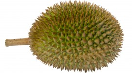 Durian Best Wallpaper