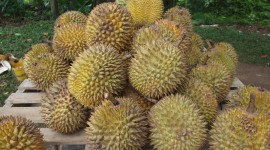Durian Wallpaper Download Free