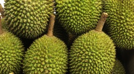 Durian Wallpaper For IPhone