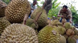 Durian Wallpaper Gallery