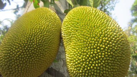 Durian wallpapers high quality