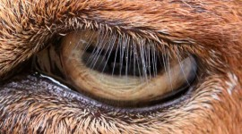 Eyelashes on the Eyes Wallpaper Gallery