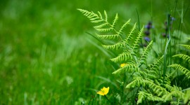 Fern Macro Wallpaper Gallery