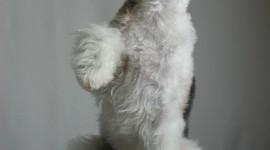 Fox Terrier Wallpaper For Mobile
