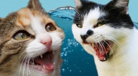 Funny Cats High Quality Wallpaper