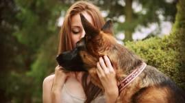 German Shepherd Photo Download
