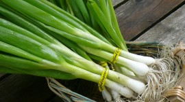 Green Onions Desktop Wallpaper For PC