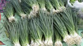 Green Onions Photo Free