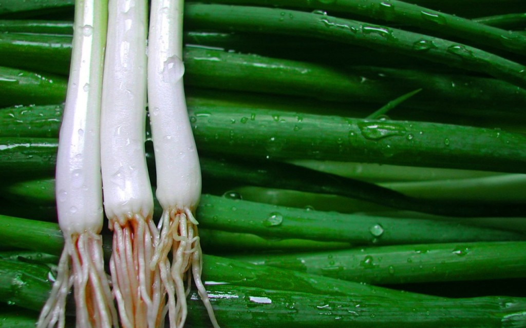 Green Onions wallpapers HD