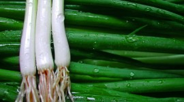 Green Onions Wallpaper
