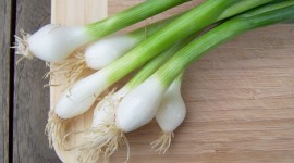 Green Onions Wallpaper Free