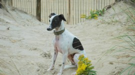 Greyhound Photo#1