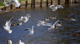 Gulls Wallpaper Download Free