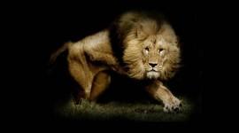 Lion Wallpaper Gallery