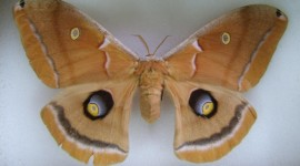 Moths Aircraft Picture