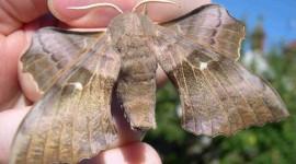 Moths Best Wallpaper