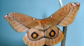Moths Desktop Wallpaper Free