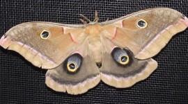 Moths Wallpaper