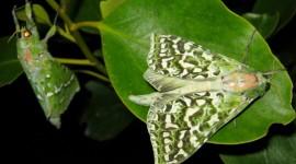 Moths Wallpaper Download
