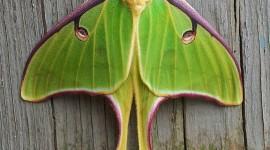 Moths Wallpaper For IPhone Download
