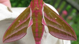 Moths Wallpaper Full HD