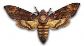 Moths Wallpaper HD