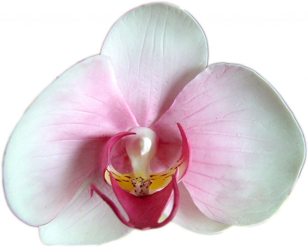 Phalaenopsis wallpapers HD