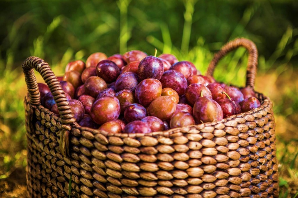 Plum wallpapers HD