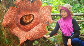 Rafflesia Arnoldii Photo