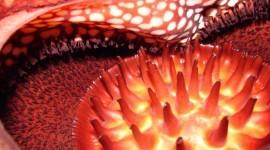 Rafflesia Arnoldii Wallpaper HQ