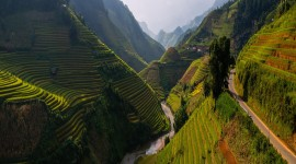 Rice Fields Wallpaper Free