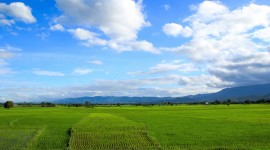 Rice Fields Wallpaper Gallery