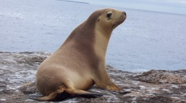 Sea Lion Best Wallpaper