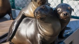 Sea Lion Photo