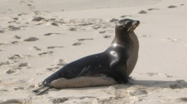 Sea Lion Photo Free