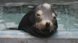 Sea Lion Photo#1