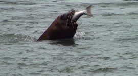 Sea Lion Photo#2
