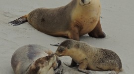 Sea Lion Pics
