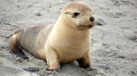 Sea Lion Wallpaper Gallery