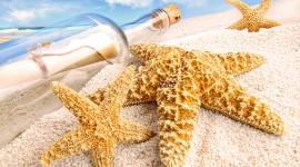 Starfish Best Wallpaper